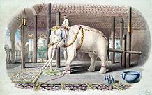 beyaz fil sendromu nedir